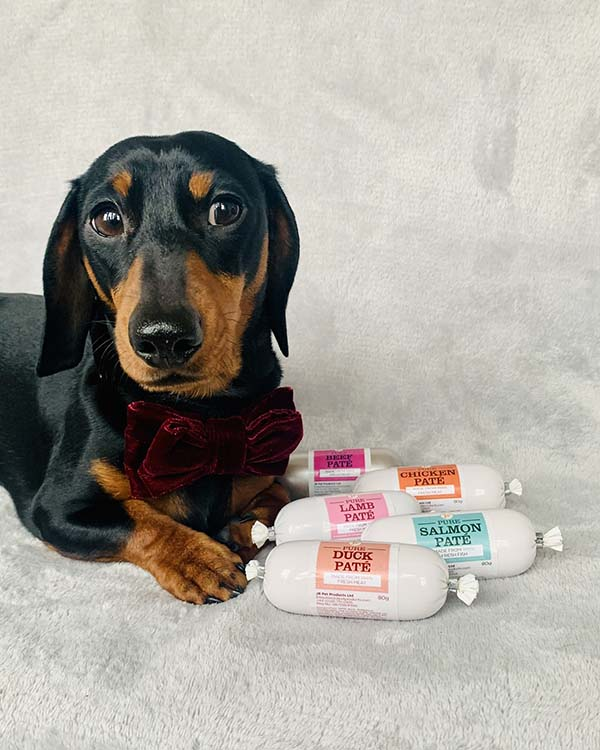 Meet Sidney one of JR Pet Products 2020 brand ambassadors